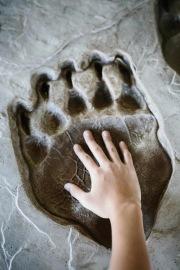 GI-Bear-Print-Hand