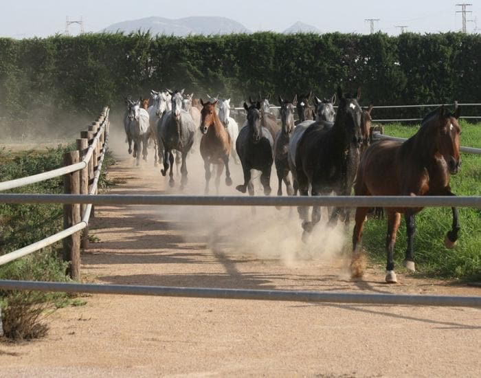 spanish-horse-ranch-802008-1